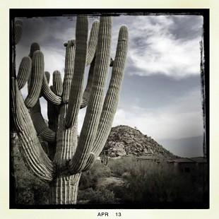 seguaro cactus