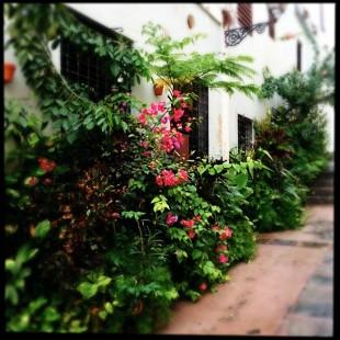 Old_San_Juan_Puerto_Rico_Plants