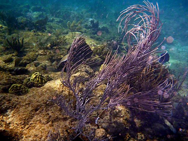 RIncon_Puerto_Rico_Underwater_2