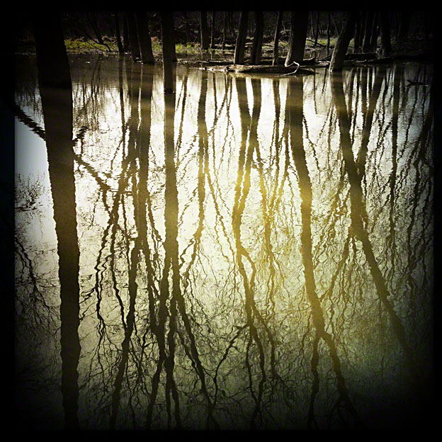 flooded_riverbank_2